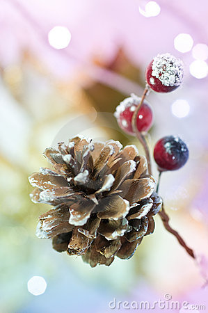 Free Christmas Pine Cone Stock Images - 11193804
