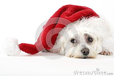 Christmas Pooch
