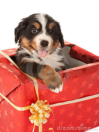 Free Christmas Present With Dog Stock Photo - 16036520