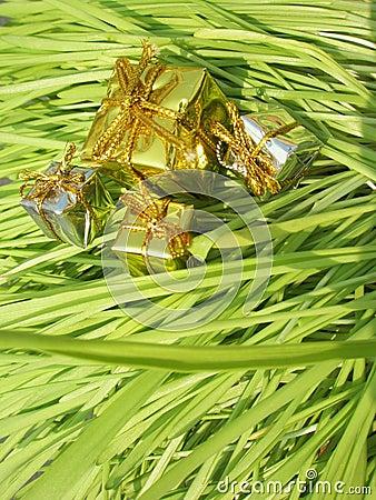 Christmas presents on grass