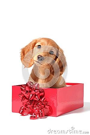 Free Christmas Puppy Stock Image - 10853641