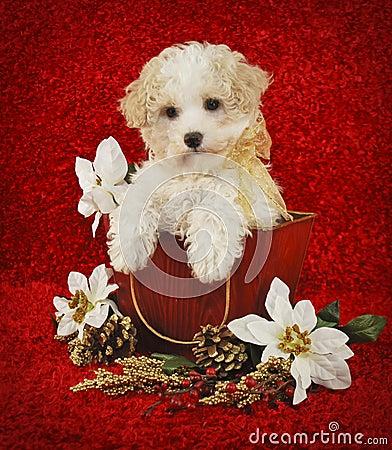 Free Christmas Puppy Stock Image - 22053571