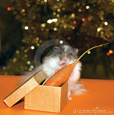 Christmas s gift for curiosity hamster