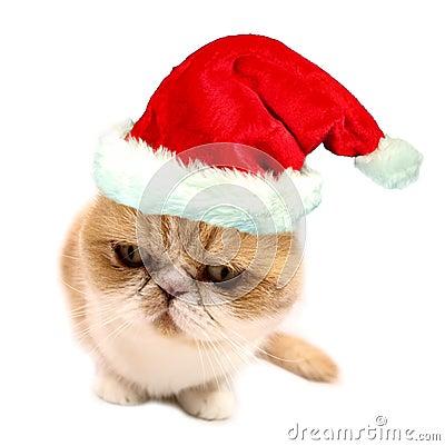 Free Christmas Santa Cat Stock Image - 11601311