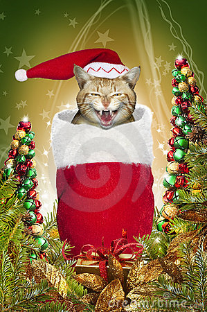 Christmas stocking cat