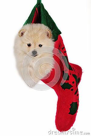 Christmas stocking puppy.