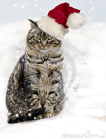Free Christmas Tabby Cat Stock Photos - 28083293