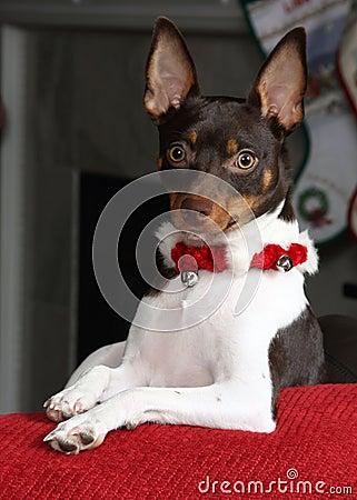 Christmas Terrier