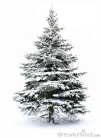 Free Christmas Tree Royalty Free Stock Photo - 11948215