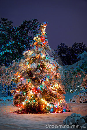 Free Christmas Tree Royalty Free Stock Photography - 22152357