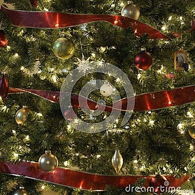 Free Christmas Tree. Royalty Free Stock Photos - 2425778