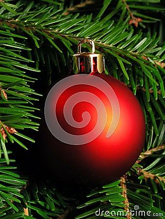 Free Christmas Tree Stock Photo - 251260