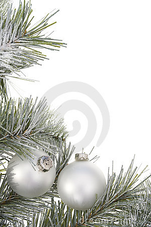 Free Christmas Tree Royalty Free Stock Photography - 3546287
