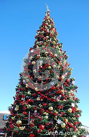 Free Christmas Tree Stock Photos - 3733133