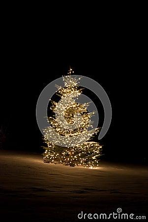 Free Christmas Tree Stock Image - 7419141