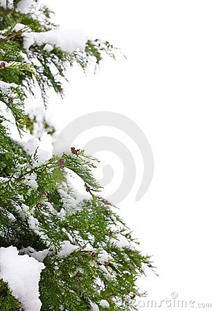 Free Christmas Tree Border Royalty Free Stock Photography - 3482457