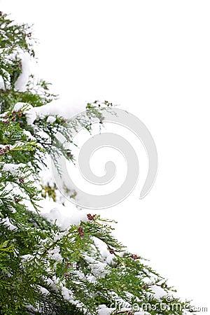 Free Christmas Tree Border Stock Images - 3715204