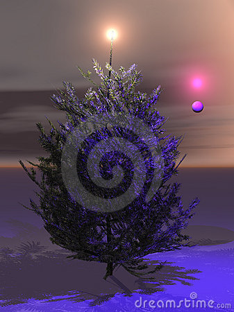 Free Christmas Tree -- Bring Them Home To Finish Stock Image - 1057201