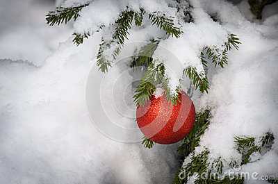 Christmas tree covered with snow