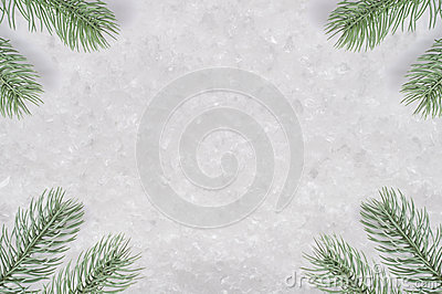 Christmas Tree Fronds on Snow