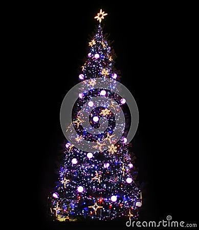 Free Christmas Tree Illuminated Royalty Free Stock Images - 3642309