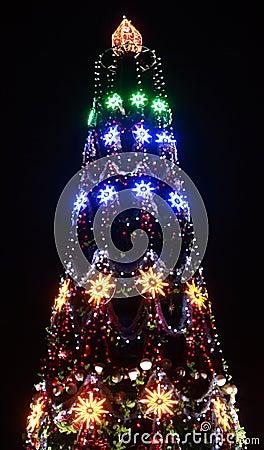 Christmas tree illuminated
