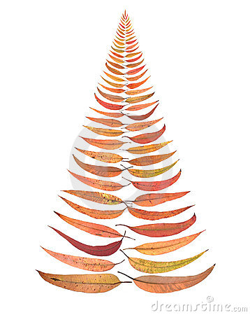 Australia Christmas Tree Leaves Isolated