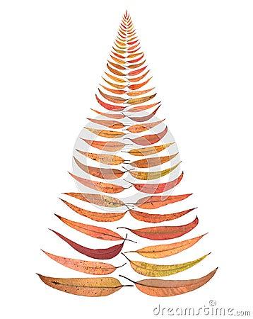 Christmas Tree Leaves Isolated