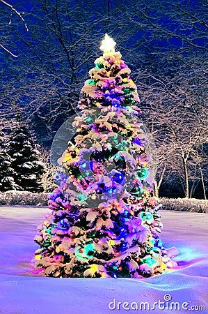 Free Christmas Tree Outside Stock Photos - 4004623