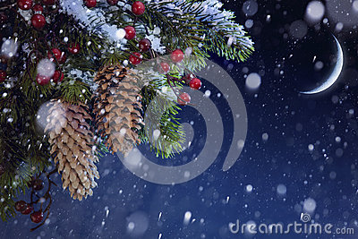 Christmas tree with snow on blue night