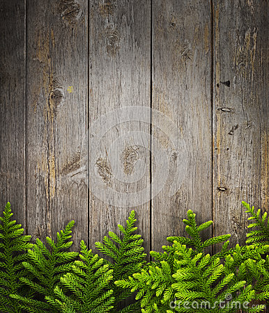Christmas Tree Wood Background