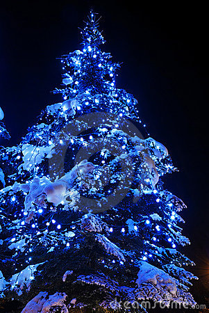 Free Christmas Trees Royalty Free Stock Images - 6746959