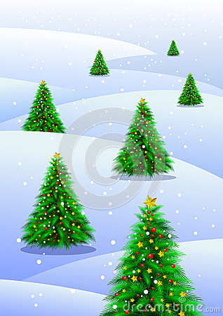 Christmas trees in snow
