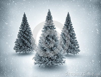 Christmas trees and snow