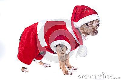 christmas Xmas dog