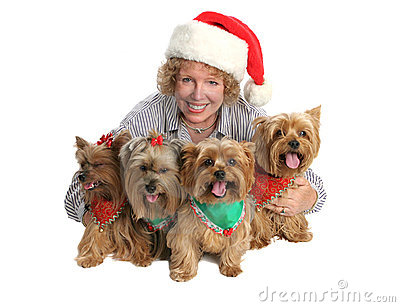 Christmas Yorkie Family Portrait