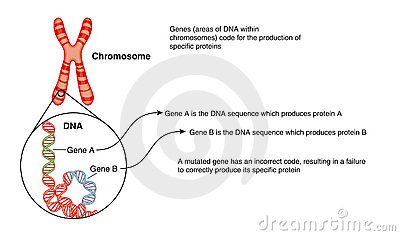 Dna and chromosome clip art cliparts dna and chromosome clip art ccuart Gallery