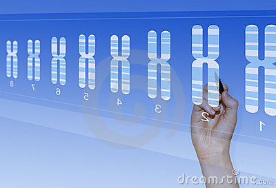 Chromosome genetics research