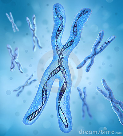 Free Chromosome X, DNA Strands Stock Photo - 11811510