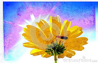 Chrysanthemum on aging paper