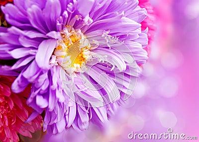 Chrysanthemum autumn flowers design