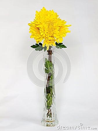 Chrysanthemum flower vase
