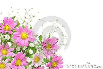 Chrysanthemum and haze grass