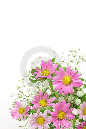 Chrysanthemum and haze grass