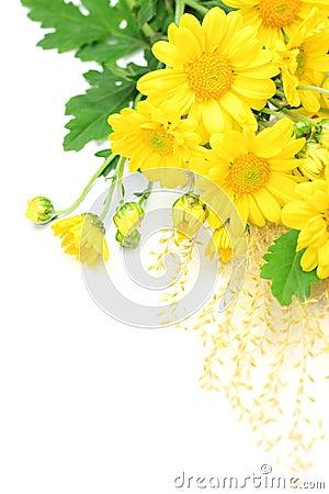 Chrysanthemum and pampas grass