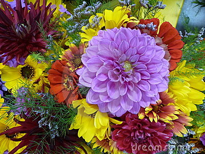 Chrysanthemums and dahlias