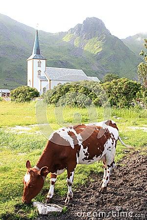 Church  of Varlberg and cows