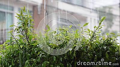 Chuvas intensas e água que vazam sobre as folhas verdes filme
