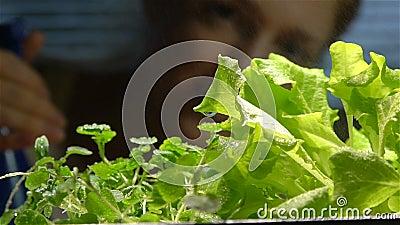 Ciérrese para arriba de un agua de rociadura del jardinero en almácigos dentro Cámara lenta almacen de video
