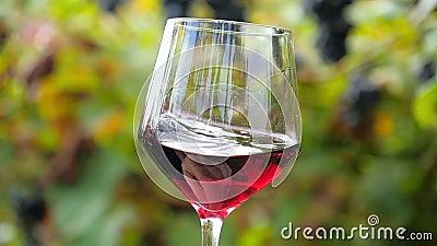 Ciérrese para arriba de un vidrio de vino rojo almacen de video